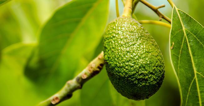 Antipodes Night Cream Avocado Pear Nourishing 60ml_media-05